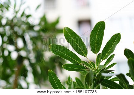 close up moist green leaves with blurred building background this image for nature concept