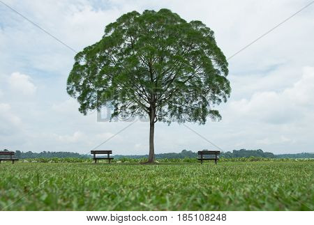 Lone Tree In Green Meadow Have Bench Both Sides Them Blue Sky And Clouds Background, This Image For