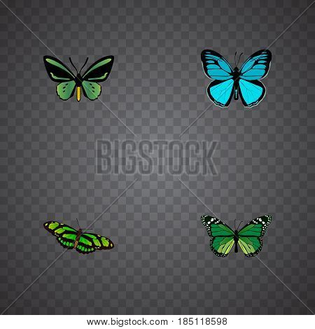 Realistic Tropical Moth, Green Peacock, Birdwing And Other Vector Elements. Set Of Beauty Realistic Symbols Also Includes Blue, Butterfly, Green Objects.