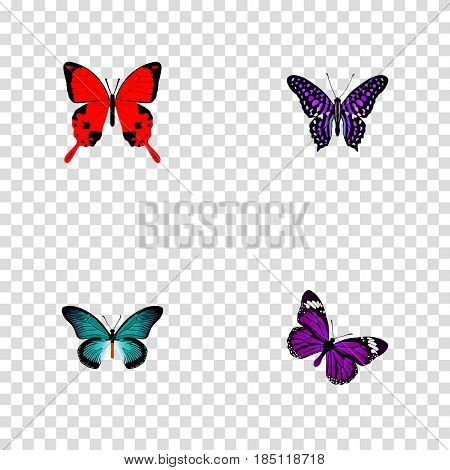 Realistic Pipevine, Sangaris, Butterfly And Other Vector Elements. Set Of Beautiful Realistic Symbols Also Includes Blue, Julia, Butterfly Objects.