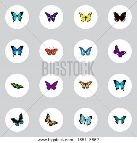 Realistic Polyommatus Icarus, Summer Insect, Bluewing And Other Vector Elements. Set Of Beauty Realistic Symbols Also Includes Purple, Hairstreak, Beauty Objects.