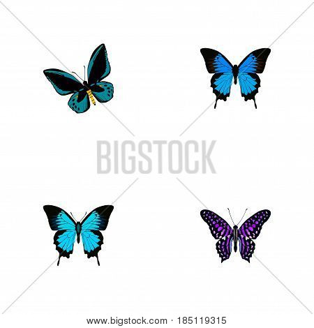 Realistic Polyommatus Icarus, Demophoon, Common Blue And Other Vector Elements. Set Of Beauty Realistic Symbols Also Includes Fly, Butterfly, Bluewing Objects.
