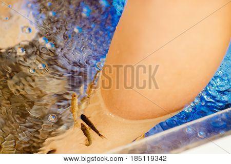 Pedicure fish spa. Rufa garra fish spa treatment. Close up of fish and feet in blue water.
