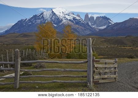 Autumn in Torres del Paine National Park in Patagonia, Chile.  Mountain peaks of the central massif rising above colourful trees in the eastern edge of the park.