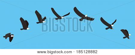 American White Eagle Flying And Catching Process, Vector