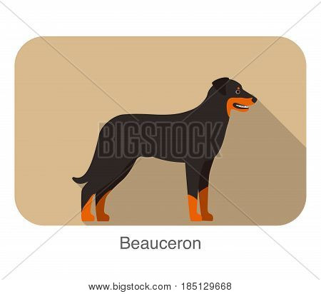 Beauceron terrier standing and watching vector illustration