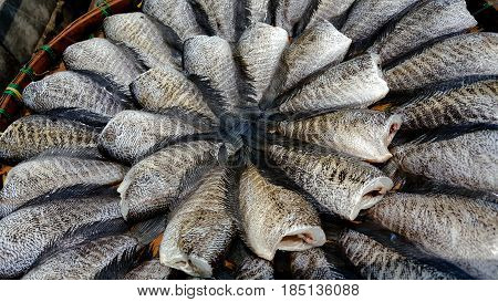 Gourami fish preserves and background . .