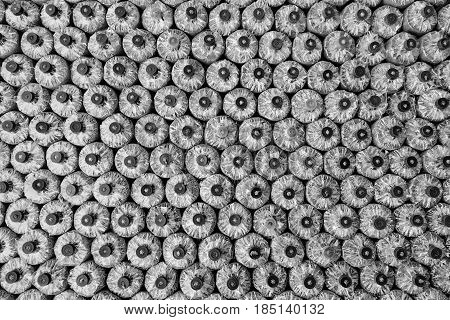 Black and white photo of Mushroom cultivation : the cultivation of oyster mushrooms from spawn in farm. Selective focusbackground