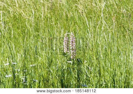 Photo of wild flowers on the green meadow