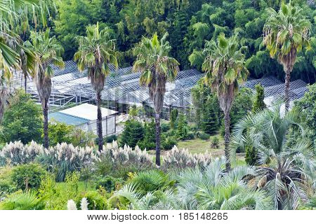 Photo of summer park with palms and greenhouse
