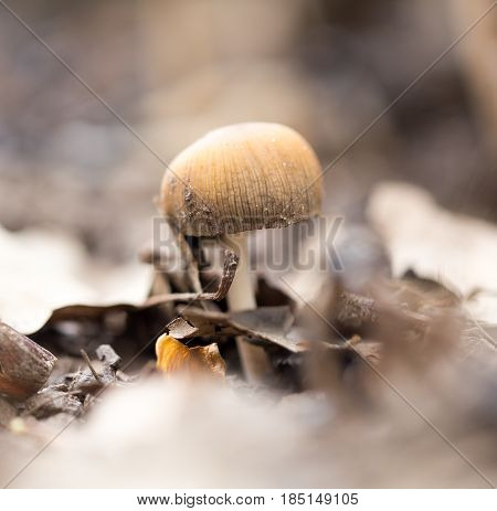 Inedible mushrooms on the ground in the park .