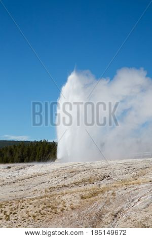 Cone geyser eruption in the Yellowstone national park, USA