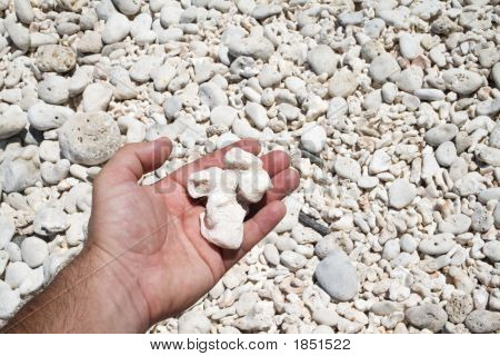 Close-up on a hand picking coral rocks on a beach poster