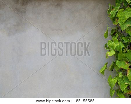 Grunge concrete wall texture with withered plant