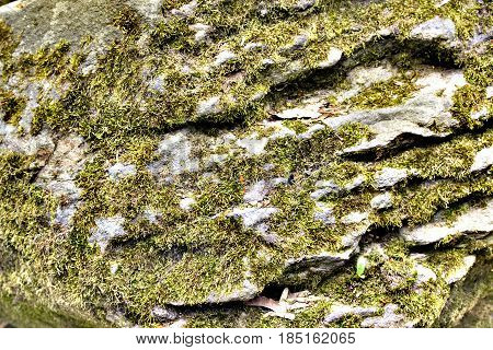 Old Gray Stone Wall With Green Moss.