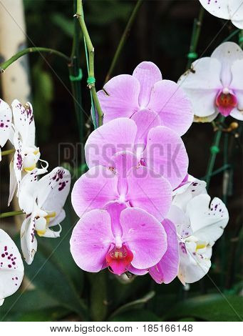orchid isolated photography over white background, photography