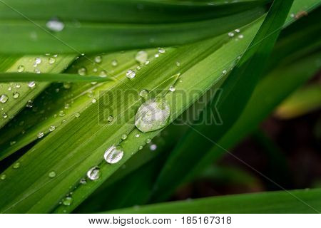 Dew Drops in the Morning Light. Water Drops. Close-up of Dew Drops on Blades of Grass. Nature after the Rain