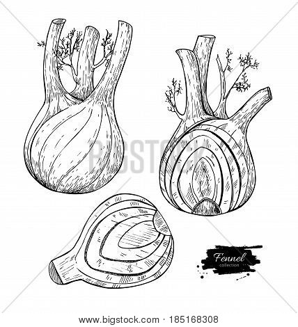 Fennel hand drawn vector illustration. Isolated Vegetable engraved style object with sliced pieces set. Detailed vegetarian food drawing. Farm market product. Great for menu, label, icon