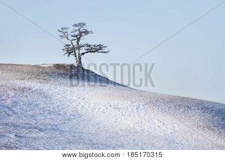 Tree On Cape Burhan. Winter Landscape