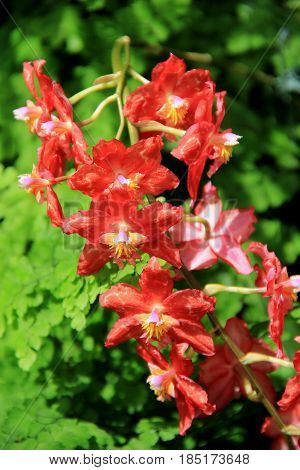 Vertical image of beautiful exotic orchids in bright color of orange set in tropical landscaped gardens.