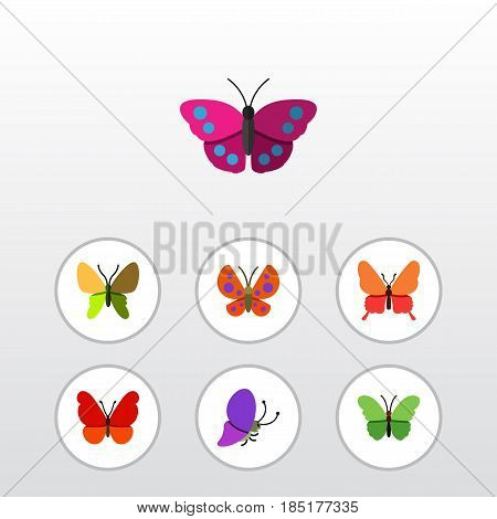 Flat Moth Set Of Danaus Plexippus, Summer Insect, Milkweed And Other Vector Objects. Also Includes Butterfly, Milkweed, Moth Elements.
