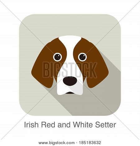 Irish Red And White Setter Terrier Dog Face Portrait