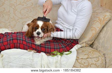 Woman Brushing Her Sleepy Dog