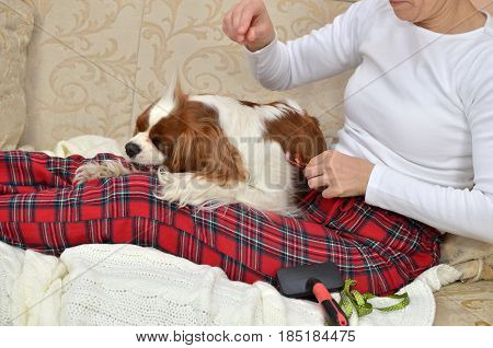 Woman Combing Her Dog