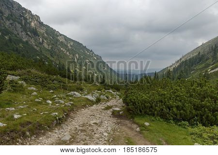Mountain top overgrown with coniferous forest and glade on the ecological walk toward   Maliovitza peak in Rila mountain, Bulgaria
