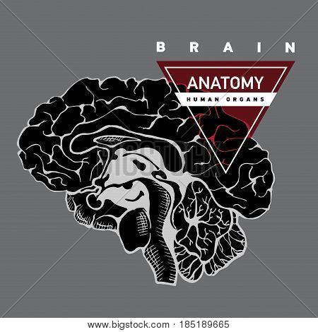 Brain anatomy. Human brain lateral view. Hand drawing illustration with typography.