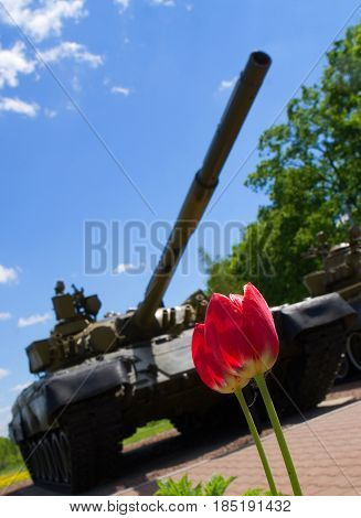 Dmitrov Russia May 24 2011: Tulips against the backdrop of a Russian tank.