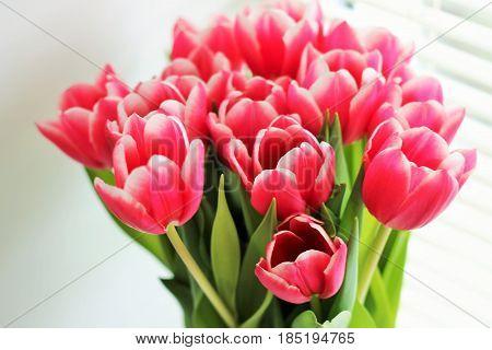цветы, тюльпаны в букете к 8 марта
