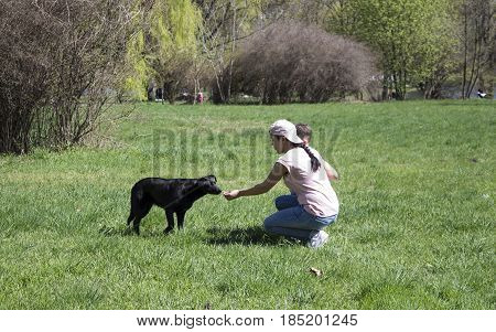 the girl feeds the black dog. young mother with her son helps homeless dog in the park.