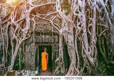 The monks and Trees growing out of Ta Prohm temple Angkor Wat in Cambodia.