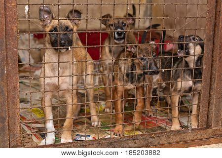 Little puppy dogs in a cage of a shelter