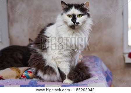 Sad cat in a shelter for homeless animals