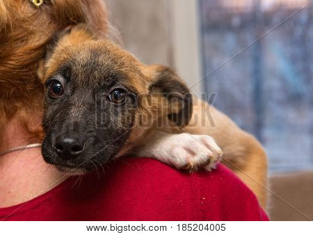 Homeless puppy from a shelter at the hands of a woman