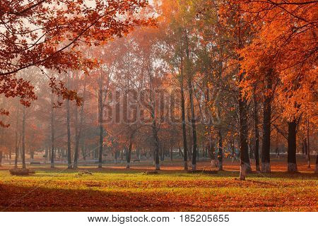 the morning fogy sunny beautiful  autumn landscape