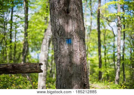 The tree marked with a blue square.