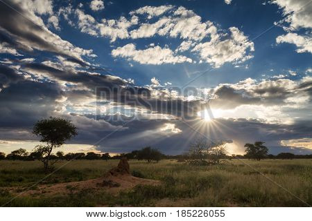 Sunset over the namibian grassland Namibia Africa