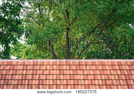 Top view of ceramic roof with tree tops background texture.