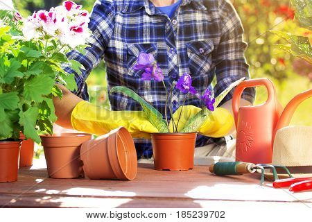 Cherishing My Garden. Portrait Of Gardener's Hands In Checkered Shirt And Rubber Gloves Are Planting