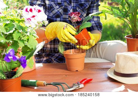 Planting Flowers Concept. Portrait Of Gardener's Hands In Checkered Shirt And Rubber Gloves Are Plan