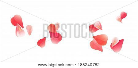 Petals design. Flower background. Petals Roses Flowers. Pink Sakura flying petals isolated on white background. Vector EPS 10, cmyk