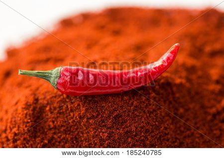 chili red hot pepper, concept of popular spice - closeup on delicious juicy pod of chili red pepper isolated over the top of red curry powder, top view, flat lay, selective focus