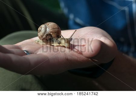 A snail crawling on the hand in evening sunlight.