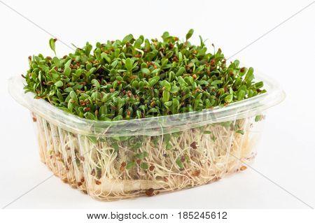 Alfalfa sprouts (Medicago sativa) isolated in white background
