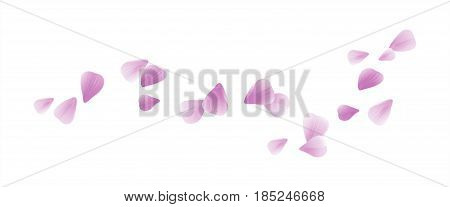 Petals Roses Flowers. Purple Violet Sakura flying petals isolated on white background. Vector EPS 10, cmyk