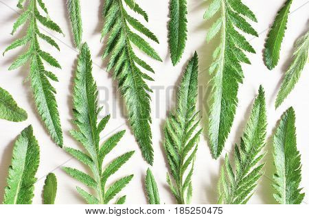 green different carved plant leaves white wooden nature background