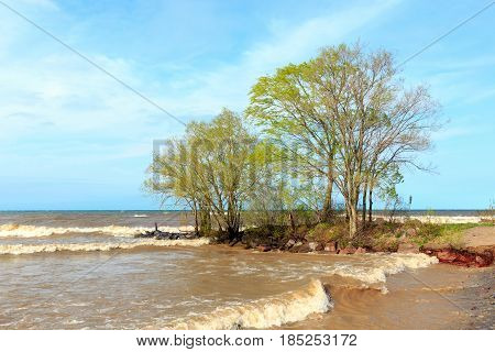 Willow trees on the shore of Lake Ontario, near Rochester, New York